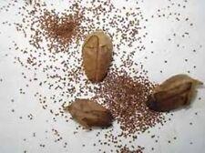 Semillas tabaco rubio Virginia, mas de1500 semillas frescas