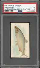 WHITEFISH 1888 N8 Allen & Ginter 50 Fish From American Waters PSA 5 EX