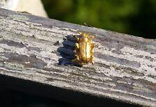 Beetle Bug Insect Gold Tone Metal Lapel Pin Pinback Brooch