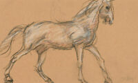 Ronald Olley (b.1923) - Mid 20th Century Graphite Drawing, Study of a Horse