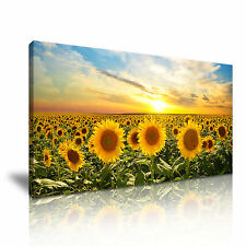 GIRASOLE TRAMONTO CIELO FLORAL CANVAS WALL ART PICTURE PRINT 60x30cm