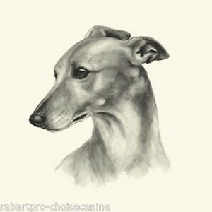 Dog Show Ring Number Clip Pin Breed - Whippet