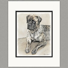 English Mastiff Dog Original Art Print 8x10 Matted to 11x14