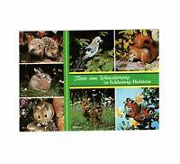 AK Ansichtskarte Tiere am Wanderweg in Schleswig-Holstein