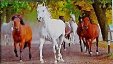 500 Pcs Puzzlebug Puzzles Arabian Horses On A Village Road Jigsaw Puzzle
