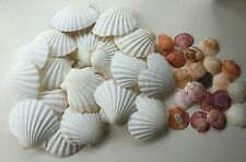 A Selection Of Shells for Artt and Crafts or Cookery 16 Large 2 Heart  20 Small