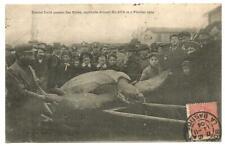 Blaye (33) Rarissime Capture d'une Tortue Luth en 1904. Vraiment Rare.