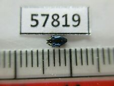 57819****Buprestidae sp. Vietnam S*****