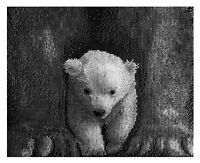 Counted Cross Stitch Kit Cute Little Polar Bear