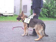 GUIDE DOG HARNESS SERVICE DOG ASSISTANCE DOG THERAPY