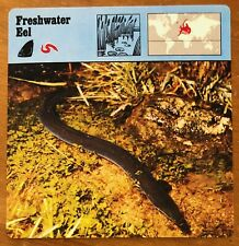 """FRESHWATER EEL"" 1977 EDITIONS RECONTRE COLLECTIBLE 4 3/4"" x 4 3/4"" CARD"