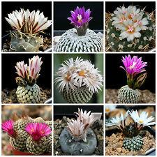 100 semi in miscuglio di Turbinicarpus mix ,piante grasse,seed cactus mix