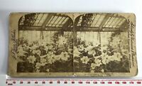 LILIES KEW GARDENS LONDON LILLIES Antique SEPIA UNDERWOOD Victorian Stereoview