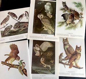 Audubon Owl Plate Vintage 1950 First Printing 9 x 12 Set Of 6