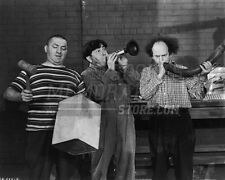 3 Three Stooges Moe Larry Curly musical instruments   8x10 11x14 16x20 photo 124