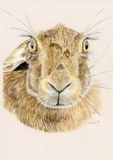 Hare Limited Edition Giclee PRINT of original coloured pencil drawing
