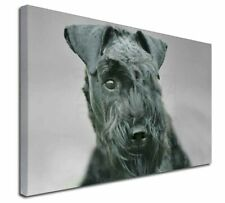 More details for kerry blue terrier dog x-large 30