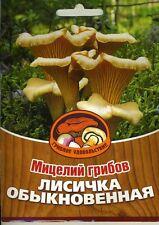 Mycelium. Chanterelle 60 ml