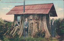 USA Cabin Cedar stump Residence Everett Wash 1910s PC