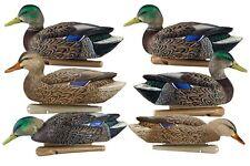 Avian-X Early Season Mallards, Decoy 6 Pack