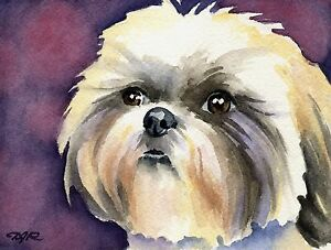 SHIH TZU Dog Watercolor Painting 8 x 10 ART Print Signed by Artist DJR