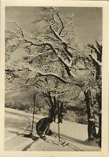 PHOTO ANCIENNE - VINTAGE SNAPSHOT - SPORT SKI ARBRE NEIGE - SKIING TREE SNOW