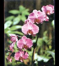 ST-GILLES-les-HAUTS (ILE DE LA REUNION) FLEURS  , ORCHIDEE , joli cliché en 1983