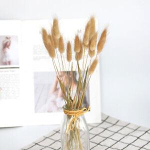 30x Rabbit Tail Grass Bunny  Tails Dried Flowers Lagurus Ovatus Plant Stems#SS