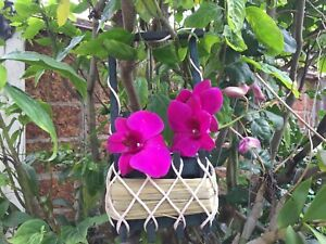 Cute Handcraft Wicker Little Wood Basket  For Home Decor ,Plant , Souvenir, Gift