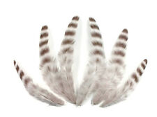 1 Dozen - Bleached Grizzly Hen Loose Feather