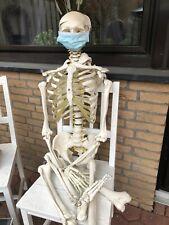 Anatomie Skelett Lebensgroß