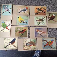 Sluis Bird Foods Vintage Post Cards Sluis Post Cards Cage Bird post card