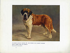 SAINT BERNARD NAMED DOG ANTIQUE DOG ART PRINT FROM 1907 BY LILIAN CHEVIOT