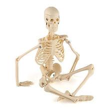 45CM Mensch Anatomisch Skelett Modell Verwendet Für Ausbildung