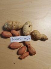 D'arachide Arachides (Arachis hypogaea) Qualité 15 Graines