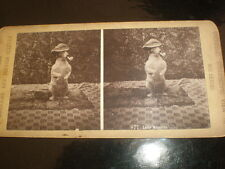 Old Stereoview photograph Lady Nicotine dog hat pipe by Universal Stereo c1890s
