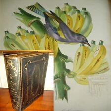 LE JARDIN DES PLANTES 11 planches couleurs coloriées
