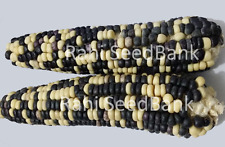 Corn Black & White - A Classic Combination of Black & White Corn Variety!!!