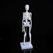 45CM Human anatomical anatomy skeleton medical teaching model + stand fexible FO