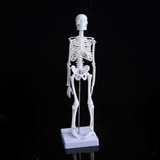 45cm Human Anatomical Anatomy Skeleton Medical Teaching Model Stand Fexib Cl