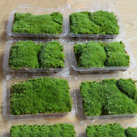 Micro Moss Aquarium Plants Landscape Garden Lawn Fish Tank Green Carpet Decor