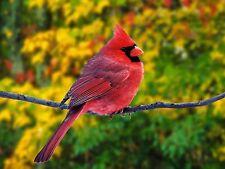 Cardinal~counted cross stitch pattern #2010~Birds Wildlife Nature Graph Chart