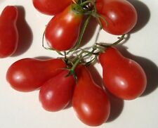 Red Pear Tomato 5+ seeds
