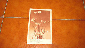 Carte Postale Bleuets Avec Poésie Giuseppe Naha Fp VG Dans 1915