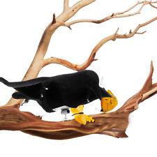 Fake Magpie Bait Bird Trap Decoying Black Hunting Decoy Outdoor Garden