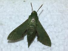 NASP04 Sphingidae A Nigeria Saturniidae Papilio to A  3 PCS from Shaki