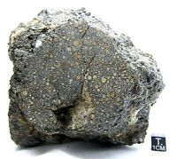 Meteorite Carbonaceous CK3 NWA 13323 officially classified Carbonaceous meteorit