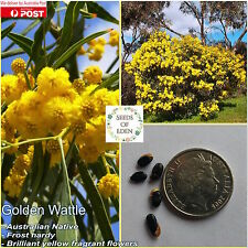 20 GOLDEN WATTLE SEEDS(Acacia pycnantha); Frost Hardy Australian Native