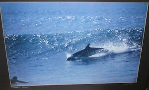 """SCOTT PRICE """"PERFECT MOMENT"""" HAND SIGNED PHOTOGRAPH"""