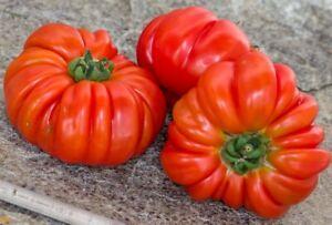 30 Graines De Tomate Ancienne rouge cotelée (2021) 🇫🇷
